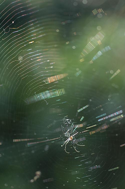 spider_12_7_9_3.jpg