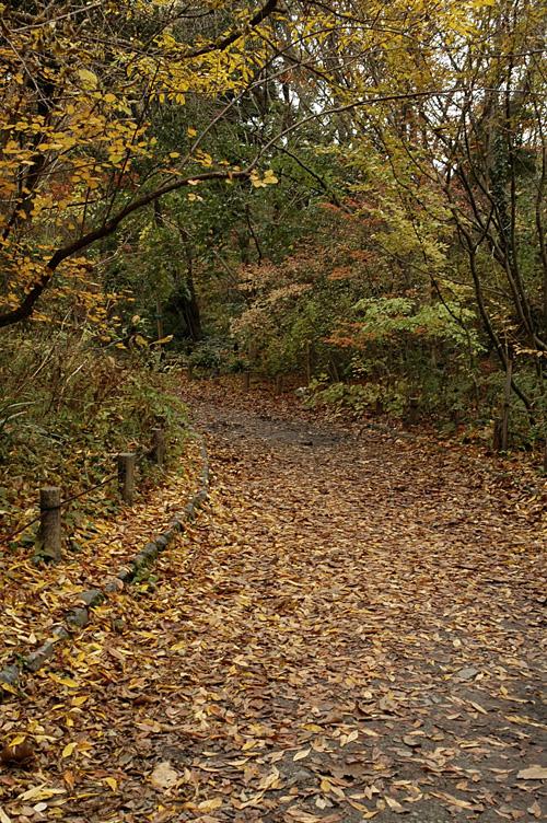 trail_12_11_28.jpg