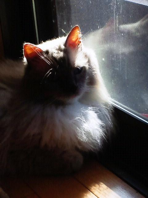 日光浴中の殿下