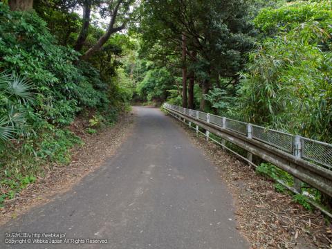 舞岡ふるさとの森に向かう坂