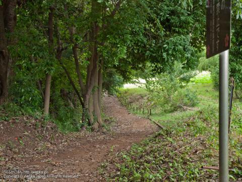 舞岡ふるさとの森の散策路