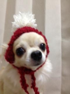 fuku7_20121111105426.jpg