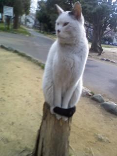 chibacat