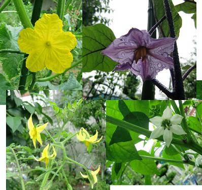 vegetabl flowers