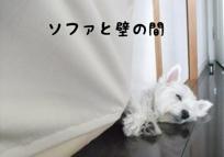 fc2blog_20120713133750a3c.jpg