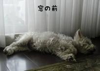 fc2blog_20120713133800672.jpg