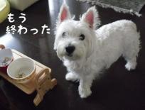 fc2blog_20120715190436558.jpg