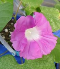 fc2blog_20120719094139cd5.jpg