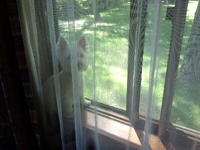 fc2blog_20120907204616c8e.jpg