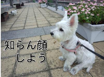fc2blog_201209231419386d5.png