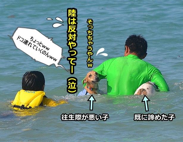 20120803-23_20120824190807.jpg