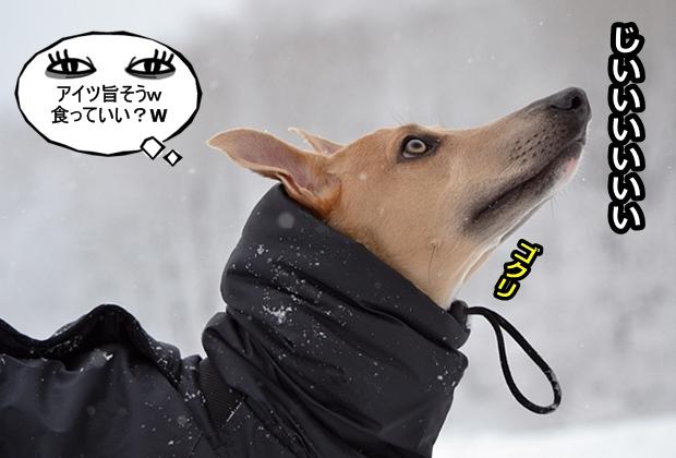 犬めくり2013