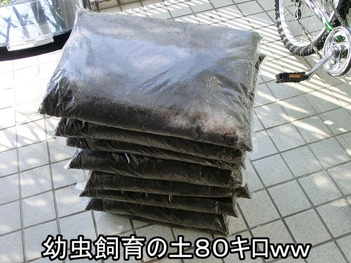 20121112-1_20121222003720.jpg