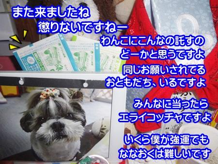 1126-05_20141126171211dbd.jpg
