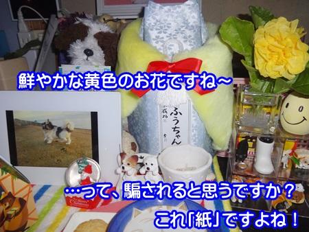 1213-06_2014121319123272d.jpg