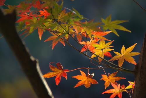 yokoyama_akisakari.jpg