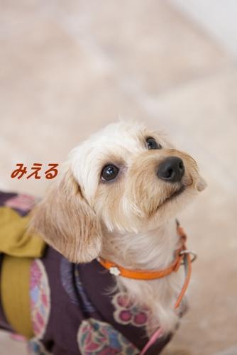 Miel_DLD_201208_3