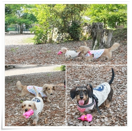 Dog_vacation3