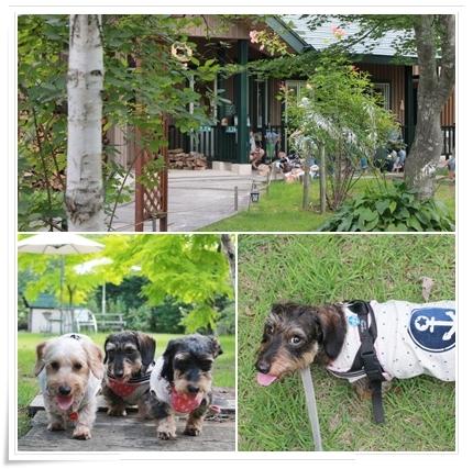 Dog_Vacation4