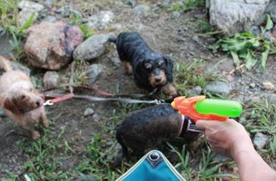 BBQ_201209_watergun