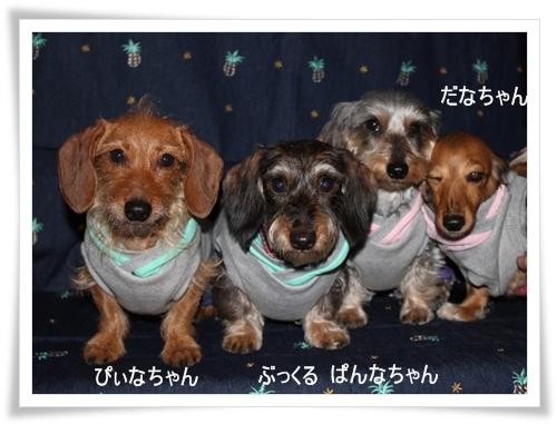 Boucle_4shimai_2012