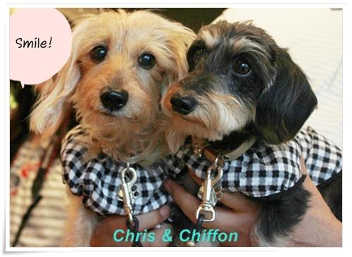 Chris_Chiffon2_20120520