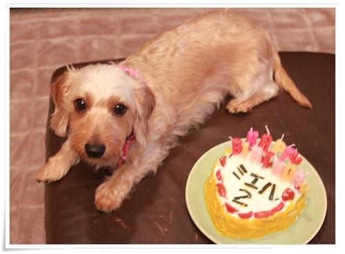 Miel_birthday2012