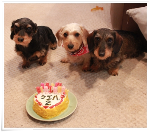 Miel_Birthday2_2012