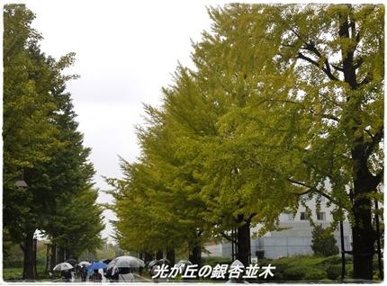 Hikarigaoka_namiki