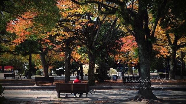 平和公園-秋-