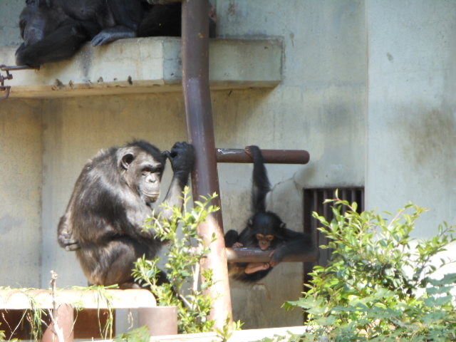 5.5の動物園 099
