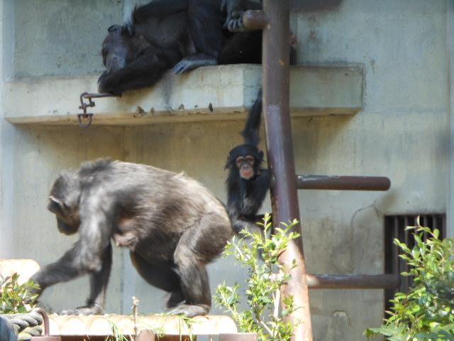 5.5の動物園 100