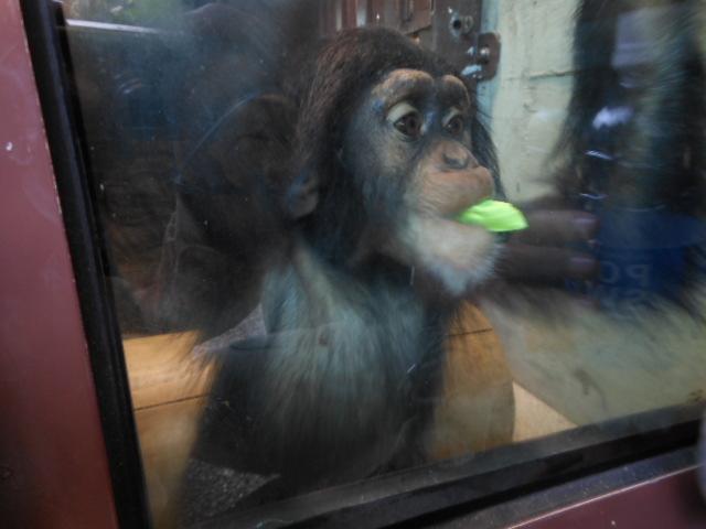 5.5の動物園 097