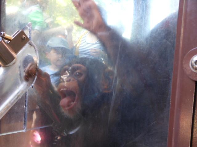 5.5の動物園 098
