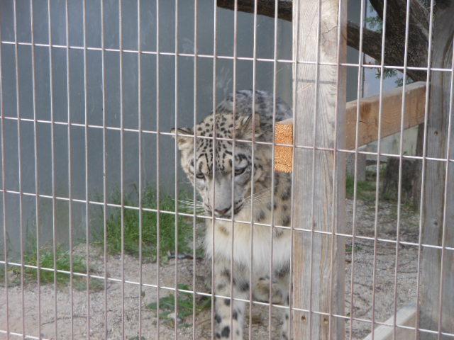 5.13動物 141