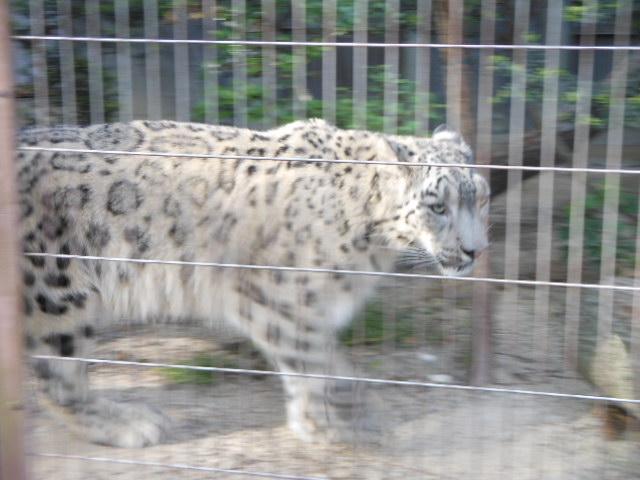 5.13動物 146