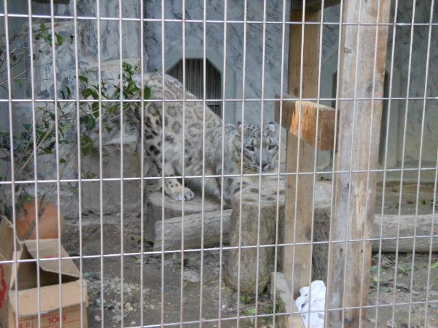 5.5の動物園 145