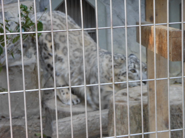 5.5の動物園 146