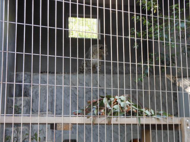 5.5の動物園 157