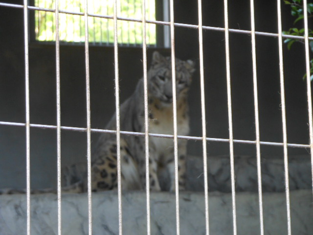 5.5の動物園 155
