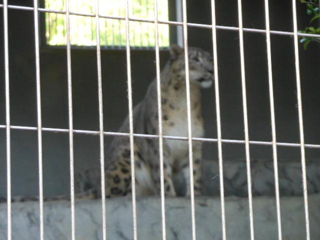 5.5の動物園 156