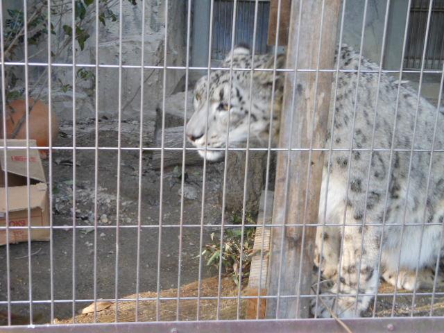 5.5の動物園 151