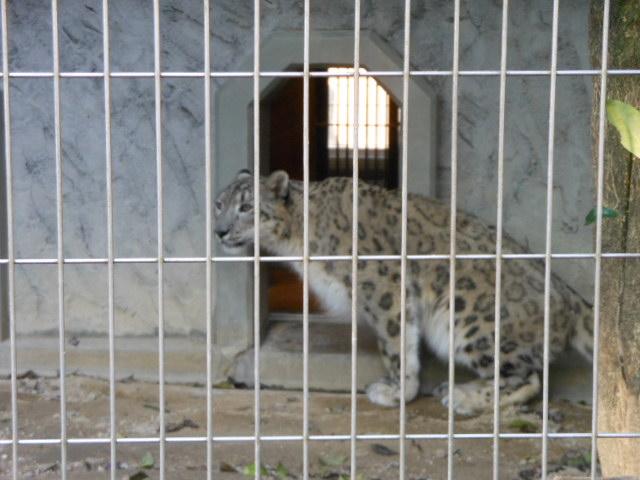 5.5の動物園 159