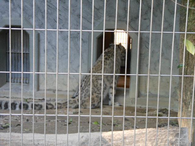 5.5の動物園 158