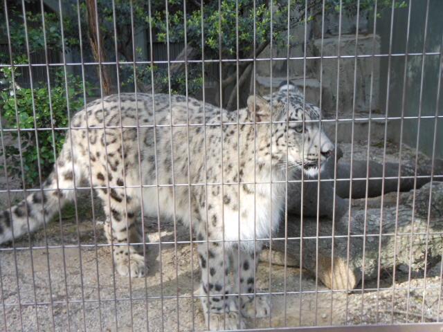 5.13動物 145