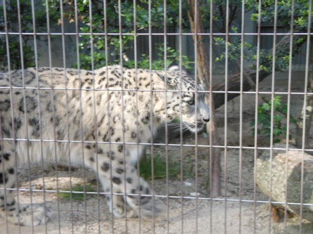 5.13動物 147