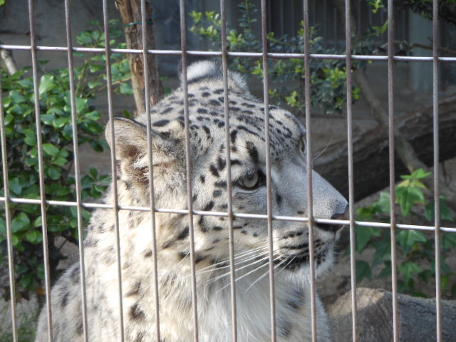 5.13動物 152