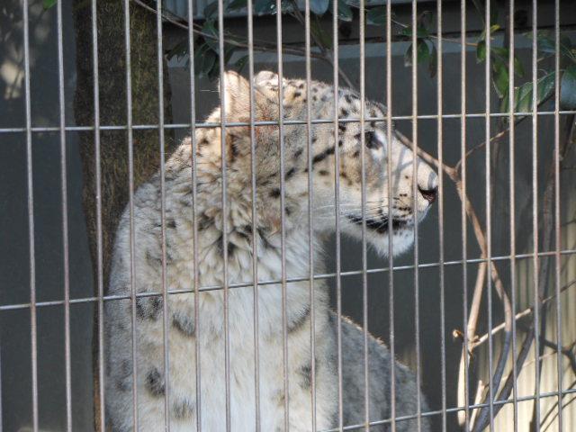 5.5の動物園 154