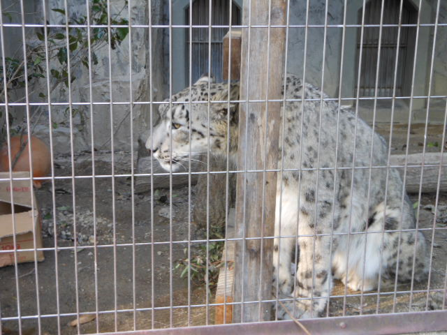 5.5の動物園 152
