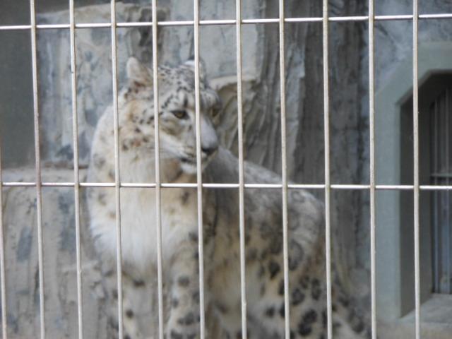 5.5の動物園 161